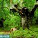 Organizan una salida para conocer los árboles trasmochos de Leitza